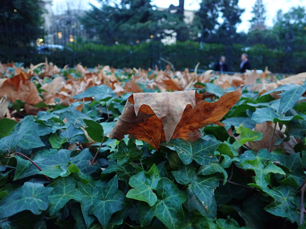 images of dead leaves that have fallen to green leaves still flourishing